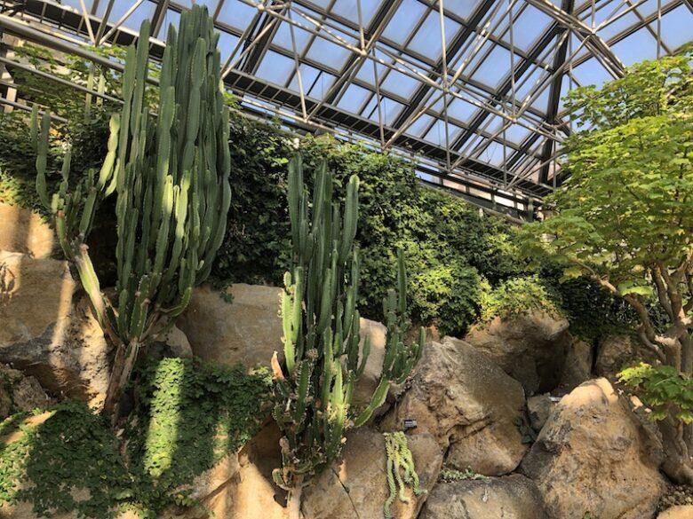 《市川市観賞植物園》熱帯植物園が無料!サボテン温室も必見です!
