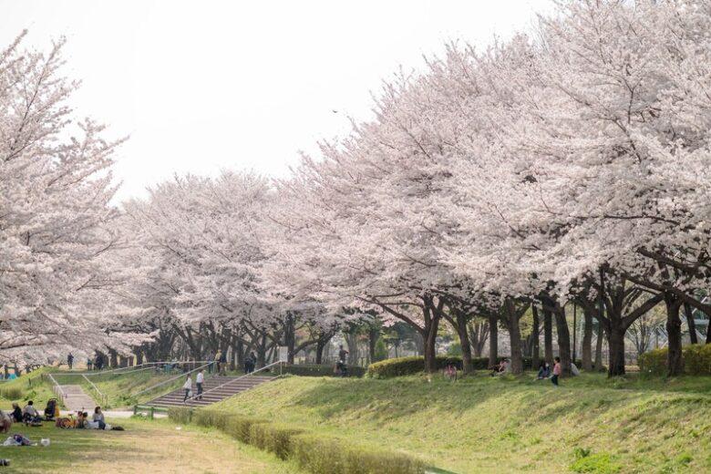 桜お花見スポットの紹介アイキャッチ