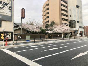 14号道路反対からの栃木家の桜