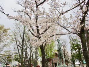 行徳駅前公園中央の桜