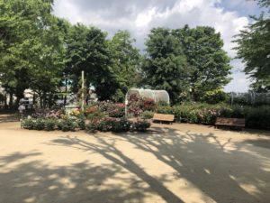 須和田公園のバラ園全体