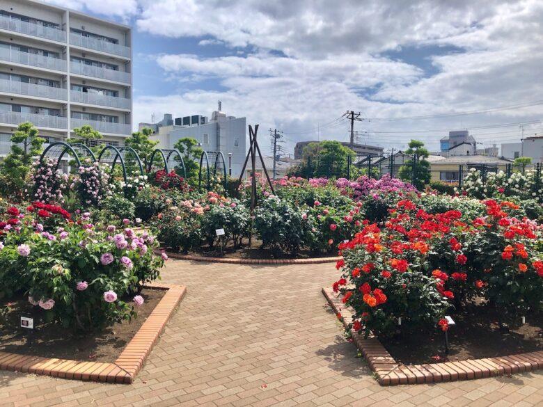 広尾防災公園のバラ園の中心部
