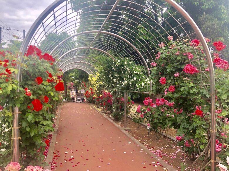 南行徳公園のバラのトンネル