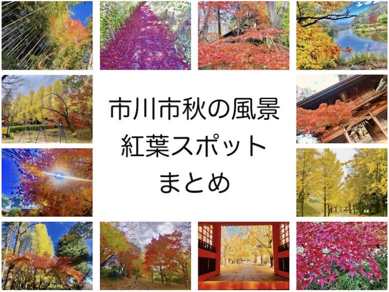 市川市の秋の風景の紹介アイキャッチ